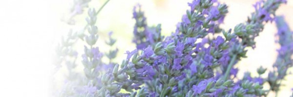 Lavender All Natural Lotion